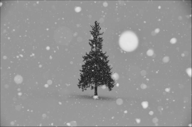 クリスマス嫌い